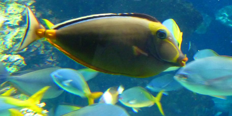 Fish-Environment and Sustatinability