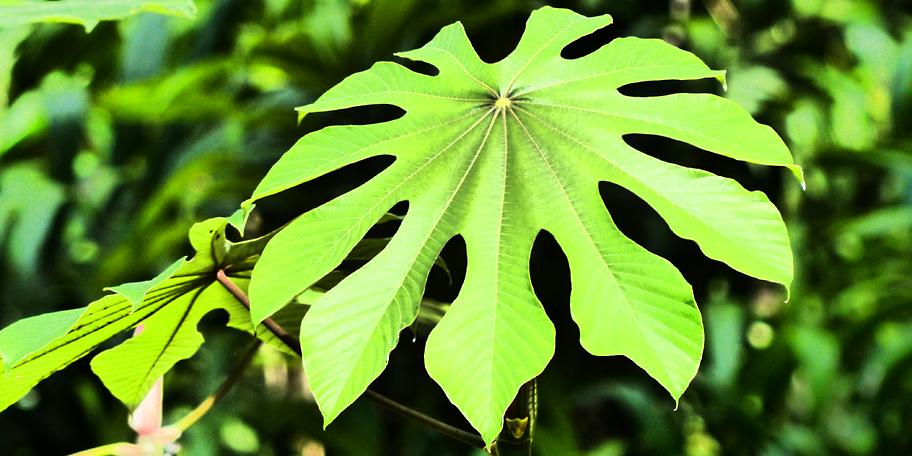 Amazon Leaf-Environment and Sustainability