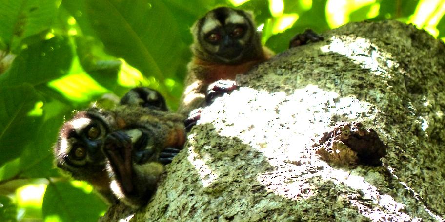 Amazon Monkey-Environment and Sustainability